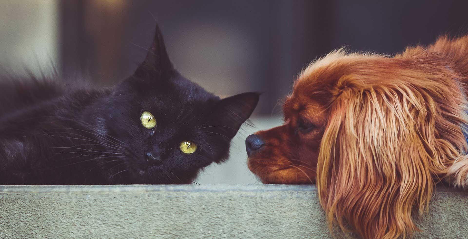 Praxis für Klein- und Heimtiere